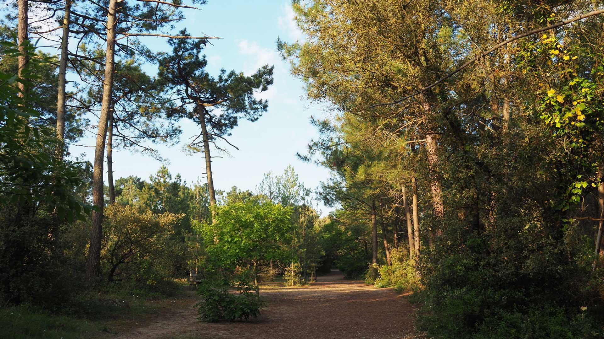forêt Saint Hilaire de Riez